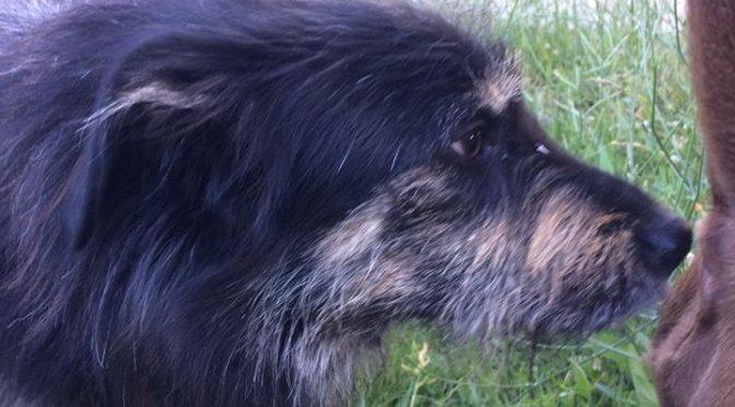Ο σκύλος της φωτογραφίας βρέθηκε στο πάρκο της πρώην Ναυτικής Βάσης, στα Βριλήσσια.