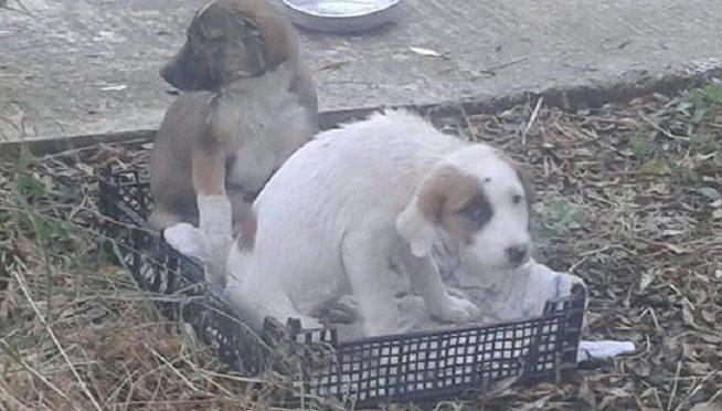 Αυτά τα δυο κουτάβια αφήσανε σε μια γειτονιά στη Μάκρη.
