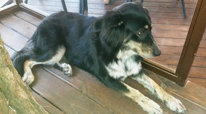 Βρέθηκε προχθές (8/8/17) αυτή η σκυλίτσα στο πάρκο Γραβιάς, στην Αγία Παρασκευή.
