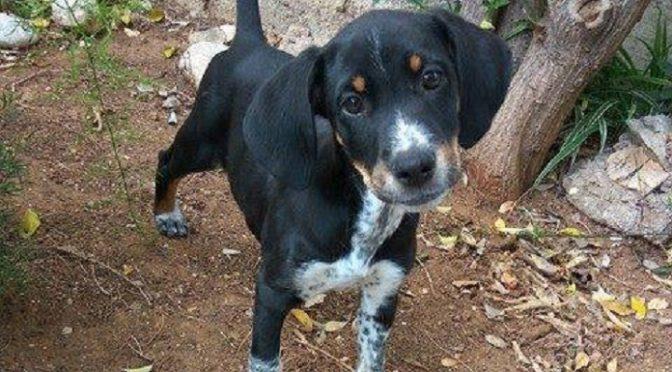 Κουταβάκι δύο μηνών περίπου βρέθηκε πριν δυο ημέρες στη Σαρανταπόρου, στο Χαλάνδρι.