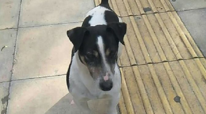 Αυτό το σκυλάκι βρέθηκε στην οδό Γυφτοπούλου στο Χαλάνδρι.