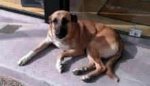 Βρέθηκε στην λεωφόρο Παπανικολή, στο Χαλάνδρι, έξω από γνωστό κατάστημα χθες το πρωί.