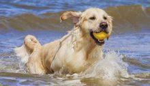 Ο νομοθέτης έχει φροντίσει κάνει τη ζωή των σκυλιών δύσκολη και στις παραλίες.