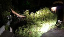 Οι δυνατοί άνεμοι έχουν ρίξει δέντρα σε όλη την Αττική.