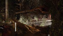 Ένα πολύ μεγάλο δέντρο έπεσε στον δρόμο σε κολόνα της ΔΕΗ, 50 περίπου μέτρα από τον σταθμό του ηλεκτρικού στην Κηφισιά.