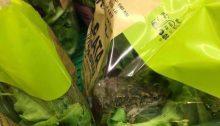 Παραδέχεται το συμβάν, το σούπερ μάρκετ ΑΒ Βασιλόπουλος,σύμφωνα με το οποίο πελάτης βρήκε και φωτογράφισε ζωντανό βατραχάκι μέσα σε συσκευασμένη σαλάτα.