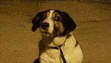 Βρέθηκε αυτό το σκυλί στην Κηφισιά μέσα στη μέση του δρόμου στην οδό Φαιστού 14, στην Κηφισιά.