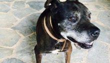 Χάθηκε ο σκύλος μας στην περιοχή της Νέας Κηφισιάς.