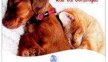 Η Επιτροπή Ζωοφιλίας του Δήμου Κηφισιάς ενημερώνει τους πολίτες ότι υπάρχει δυνατότητα περίθαλψης έκτακτων περιστατικών τραυματισμένων αδέσποτων ζώων, σκύλων ή γατιών.