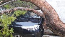 Πτώση πεύκου αλλά και σπάσιμο μεγάλου κλαδιού από τον δυνατό αέρα με υλικές ζημιές σε δυο αυτοκίνητα σήμερα το πρωί στα Βριλήσσια.