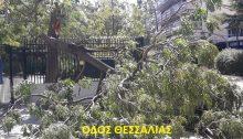 Δυο δέντρα έσπασαν στον κορμό τους και έπεσαν, σήμερα το πρωί, στα Βριλήσσια.