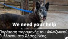 Τα σκυλάκια και οι γατούλες που φροντίζει οΦιλοζωικός Σύλλογος Νέας Φιλαδέλφειας, στο Άλσος ξεσπιτώνονται...